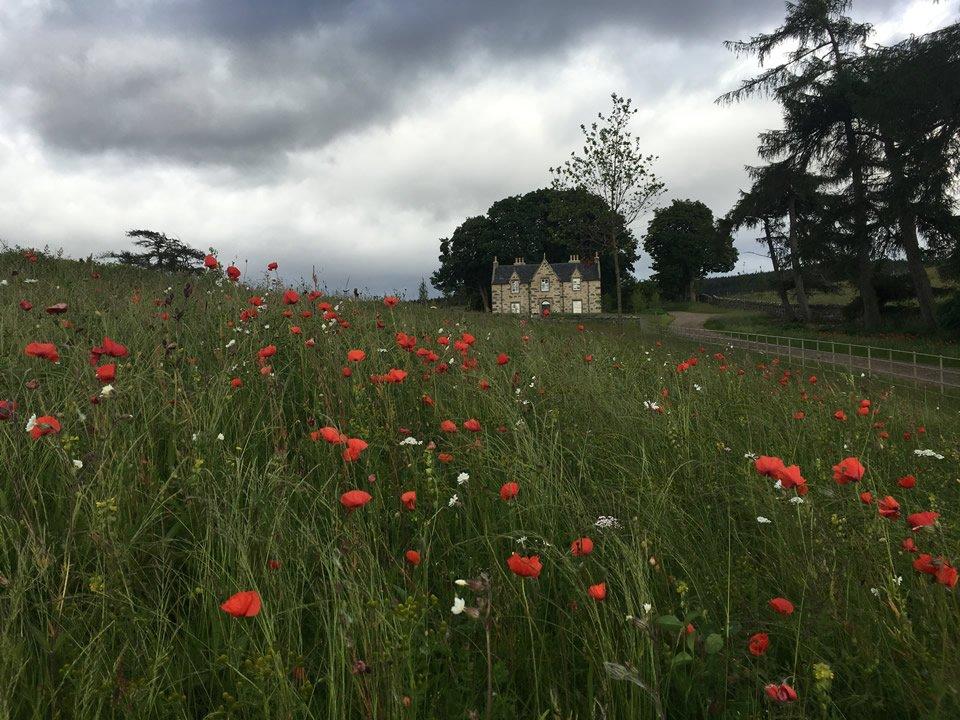 killihuntley poppy fields