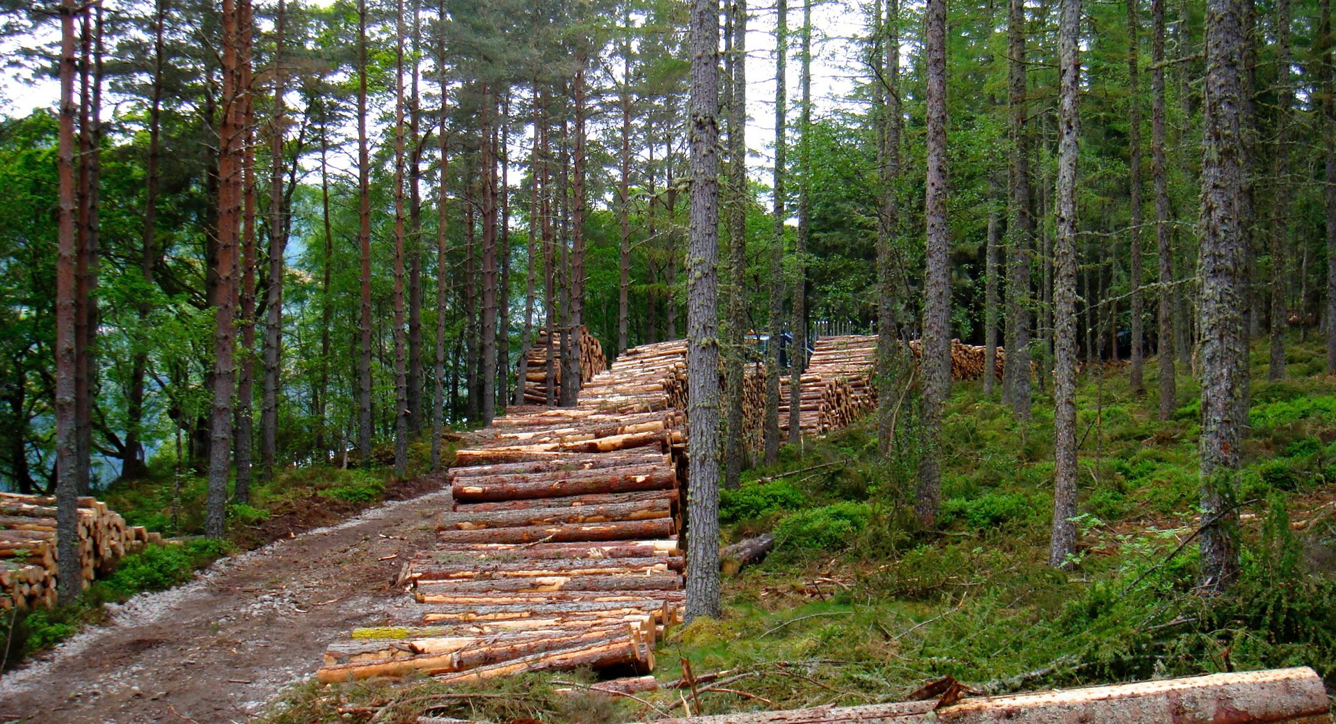 Forestry logs