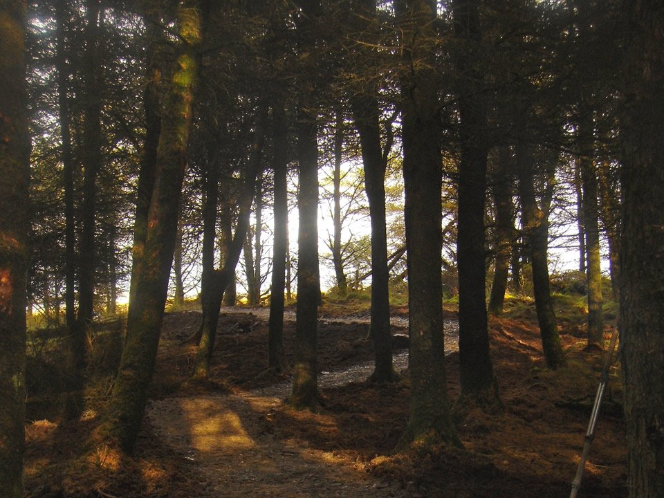 Lillymire forest